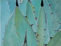 A photo of Pastel agave; Misty morning agave; Green agave